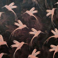 Jersey colibris