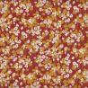 Coton prairie rousse